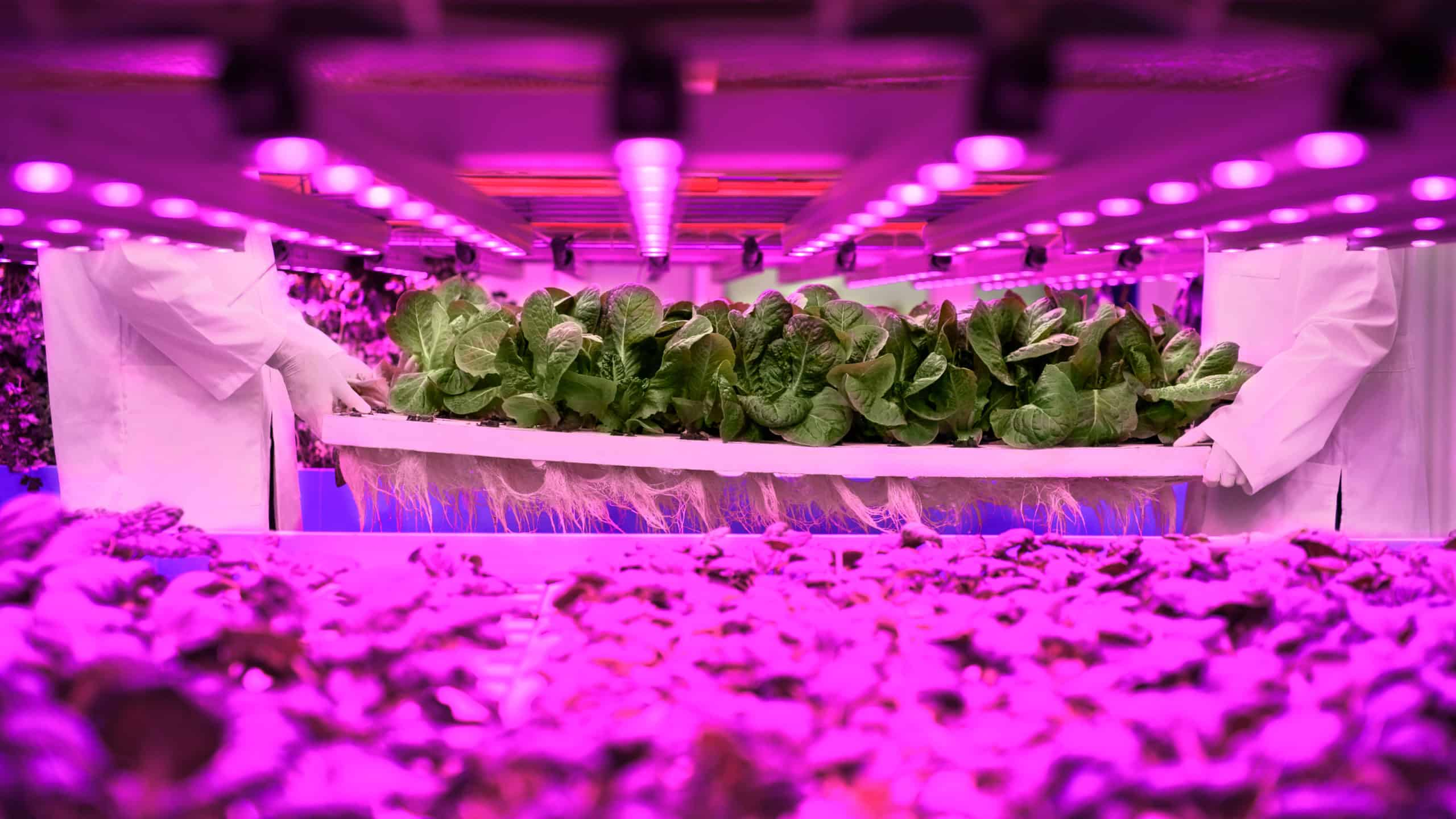 Is controlled environment agriculture ready to seize the future?