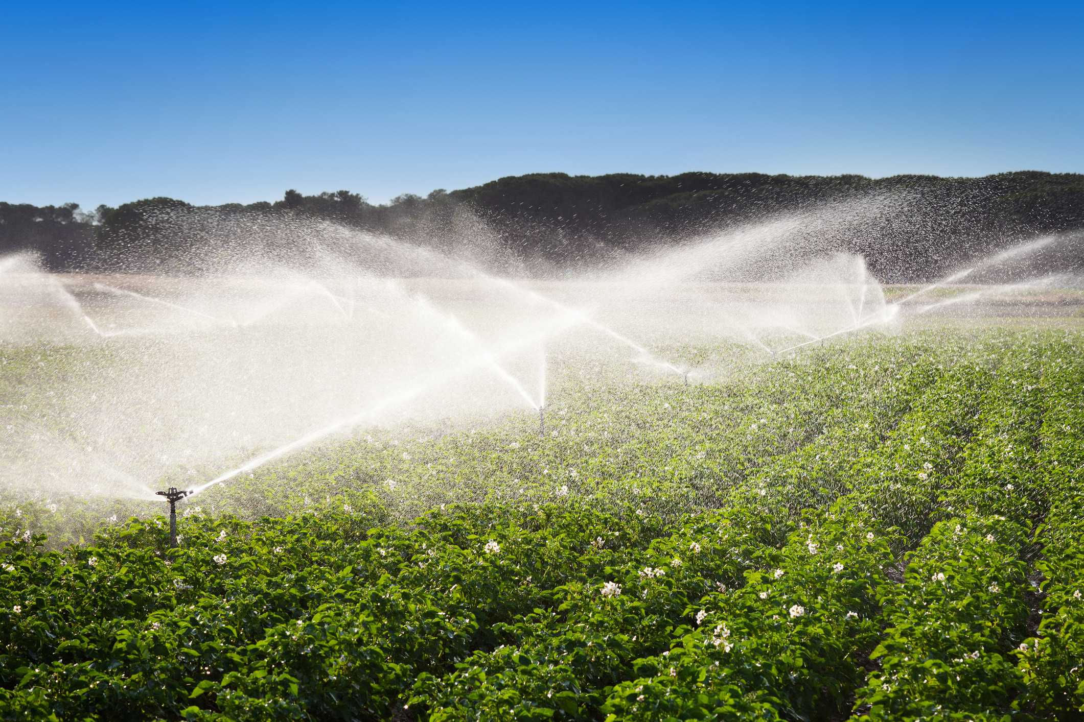 Getting the balance right: Water resources and food security in Saudi Arabia